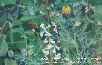 Garden Rocket (Detail) © Damaris Lysaght Oil on canvas on board 51x37cm framed